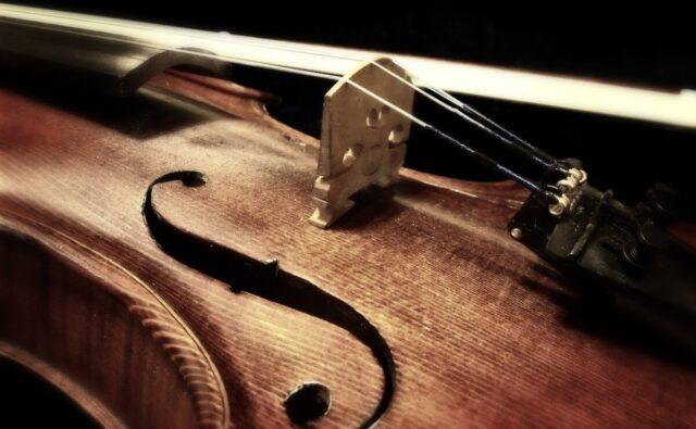 ヴァイオリンに使われるスプルース(松)の表面板